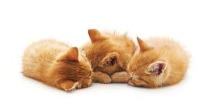 γατάκια μικρά τρία στοκ φωτογραφίες με δικαίωμα ελεύθερης χρήσης
