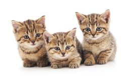 γατάκια μικρά τρία στοκ φωτογραφία με δικαίωμα ελεύθερης χρήσης