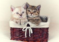 γατάκια μικρά δύο στοκ εικόνες με δικαίωμα ελεύθερης χρήσης
