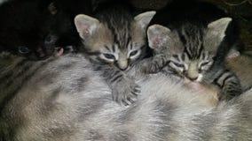 Γατάκια περιποίησης Στοκ φωτογραφία με δικαίωμα ελεύθερης χρήσης