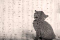 Γατάκια που κάθονται σε ένα φύλλο μουσικής, υπόβαθρο Στοκ Φωτογραφία