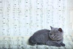 Γατάκια που κάθονται σε ένα φύλλο μουσικής Στοκ Φωτογραφίες