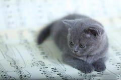 Γατάκια που κάθονται σε ένα φύλλο μουσικής Στοκ φωτογραφίες με δικαίωμα ελεύθερης χρήσης