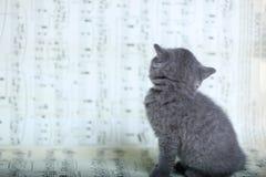 Γατάκια που κάθονται σε ένα φύλλο μουσικής Στοκ εικόνα με δικαίωμα ελεύθερης χρήσης