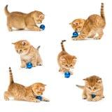 Γατάκια που παίζουν με ένα παιχνίδι Χριστουγέννων Στοκ φωτογραφίες με δικαίωμα ελεύθερης χρήσης