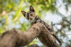 Γατάκια που παίζουν σε ένα δέντρο Στοκ φωτογραφίες με δικαίωμα ελεύθερης χρήσης