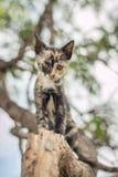 Γατάκια που παίζουν σε ένα δέντρο Στοκ φωτογραφία με δικαίωμα ελεύθερης χρήσης