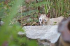 Γατάκια που παίζουν σε ένα δέντρο Στοκ Φωτογραφίες