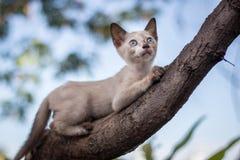 Γατάκια που παίζουν σε ένα δέντρο Στοκ εικόνα με δικαίωμα ελεύθερης χρήσης