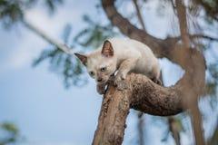 Γατάκια που παίζουν σε ένα δέντρο Στοκ Φωτογραφία