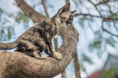 Γατάκια που παίζουν σε ένα δέντρο Στοκ Εικόνες