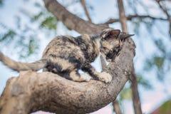 Γατάκια που παίζουν σε ένα δέντρο Στοκ Εικόνα