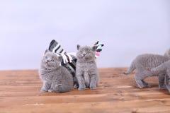 Γατάκια που παίζουν σε ένα ξύλινο υπόβαθρο Στοκ εικόνα με δικαίωμα ελεύθερης χρήσης