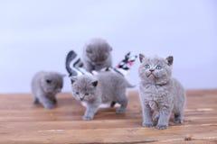 Γατάκια που παίζουν σε ένα ξύλινο υπόβαθρο Στοκ εικόνες με δικαίωμα ελεύθερης χρήσης