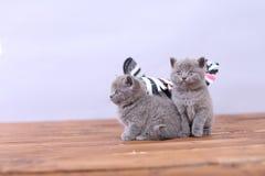 Γατάκια που παίζουν σε ένα ξύλινο υπόβαθρο Στοκ Εικόνες