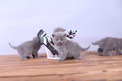 Γατάκια που παίζουν σε ένα ξύλινο υπόβαθρο Στοκ Φωτογραφίες