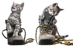 Γατάκια που παίζουν στα παπούτσια Στοκ Εικόνα