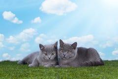 Γατάκια που παίζουν στη χλόη μια ηλιόλουστη θερινή ημέρα Στοκ φωτογραφία με δικαίωμα ελεύθερης χρήσης