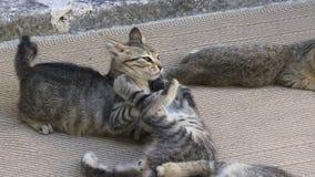 Γατάκια που παίζουν στο έδαφος