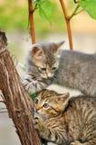 Γατάκια που παίζουν στο δέντρο Στοκ Εικόνες
