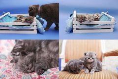 Γατάκια σε ένα ξύλινο κλουβί, multicam οθόνη πλέγματος 2x2 Στοκ Εικόνα