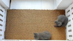 Γατάκια σε ένα χαλί πορτών απόθεμα βίντεο