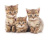 γατάκια τρία στοκ εικόνα με δικαίωμα ελεύθερης χρήσης