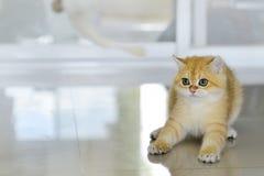 Γατάκια χαριτωμένα Στοκ φωτογραφία με δικαίωμα ελεύθερης χρήσης