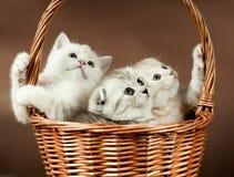 γατάκια Στοκ φωτογραφία με δικαίωμα ελεύθερης χρήσης