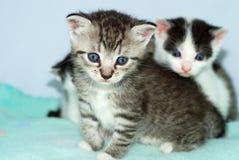 γατάκια στοκ φωτογραφίες με δικαίωμα ελεύθερης χρήσης