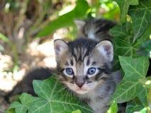 γατάκια στοκ φωτογραφία