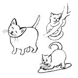 γατάκια Στοκ Φωτογραφίες