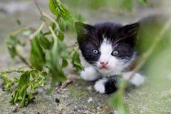 γατάκι λίγα Στοκ φωτογραφία με δικαίωμα ελεύθερης χρήσης