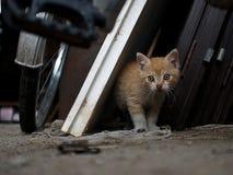 γατάκι λίγα Στοκ φωτογραφίες με δικαίωμα ελεύθερης χρήσης