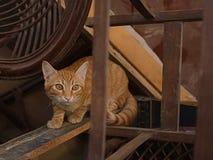 γατάκι λίγα Στοκ Εικόνα