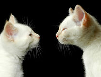 γατάκι αδελφών Στοκ Εικόνες