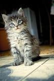γατάκι αρκετά Στοκ φωτογραφία με δικαίωμα ελεύθερης χρήσης