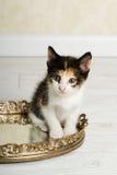 γατάκι βαμβακερού υφάσμα& Στοκ Εικόνα