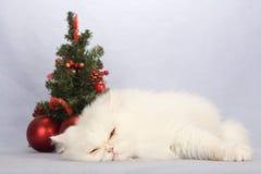 γατάκι διακοσμήσεων Χρι&sig Στοκ φωτογραφία με δικαίωμα ελεύθερης χρήσης