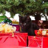 γατάκι δώρων Χριστουγέννω&n στοκ εικόνες