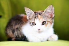 γατάκι εδρών Στοκ εικόνα με δικαίωμα ελεύθερης χρήσης