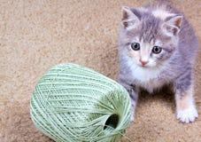γατάκι εύθυμο Στοκ Εικόνα