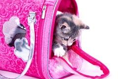 γατάκι εύθυμο Στοκ Εικόνες