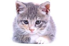 γατάκι εύθυμο Στοκ φωτογραφίες με δικαίωμα ελεύθερης χρήσης