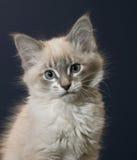 γατάκι εύθυμο Στοκ Φωτογραφίες