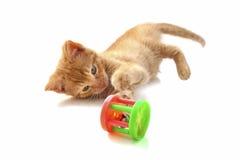 γατάκι εύθυμο Στοκ εικόνες με δικαίωμα ελεύθερης χρήσης