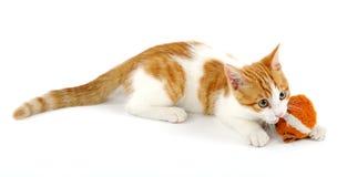 γατάκι εύθυμο Στοκ εικόνα με δικαίωμα ελεύθερης χρήσης