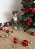 Γατάκι και χριστουγεννιάτικο δέντρο Στοκ Φωτογραφία