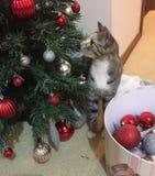 Γατάκι και χριστουγεννιάτικο δέντρο Στοκ Εικόνα