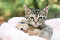 Γατάκι και Teddy Στοκ Εικόνα